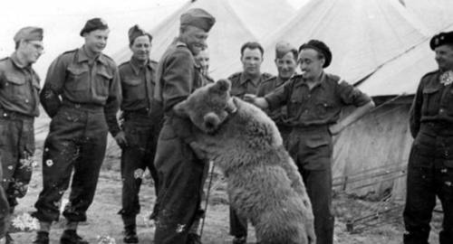 Miś Wojtek / Bear Wojtek with Polish soldiers, World War II (źrródło: Facebook Tropem Historii)