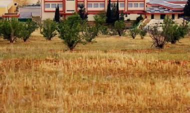 A short story of one Lebanese school